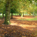 Autumn in Ashton Park