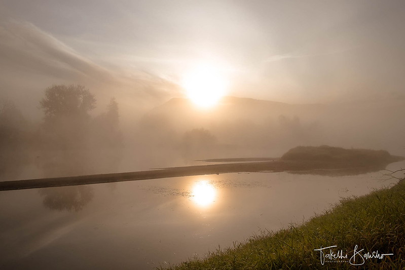 Foggy morning #4