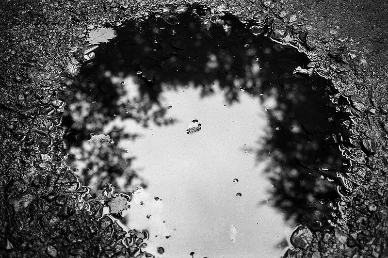 FILM - Trees in a puddle