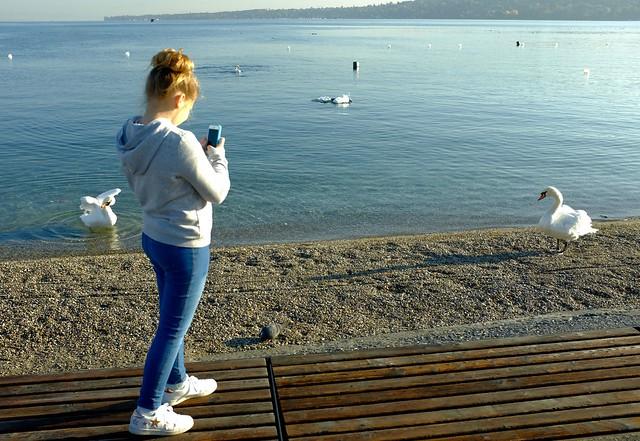 Genevessä