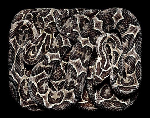 snake_art_03