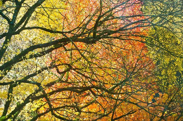 Autumn Trees Mix
