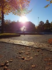 Autumn sun, Ilaparken