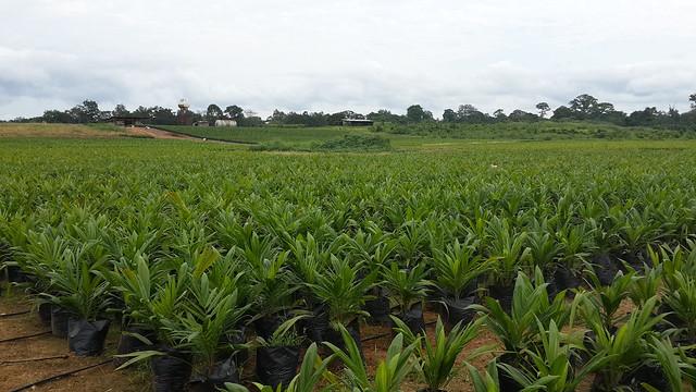 Agriculture, Développement Humain et Social