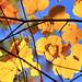 Feuillage d'autunno