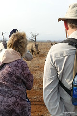Walking with White Rhino, Mkhaya (18)