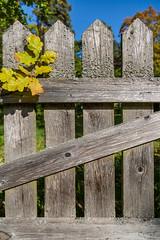 Autumn Oak Tree Leaves On Ancient Fence.