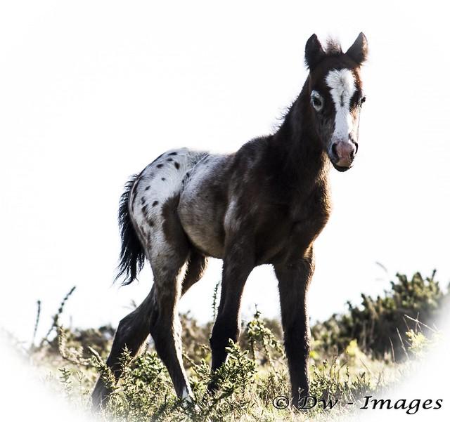 Pony_wm