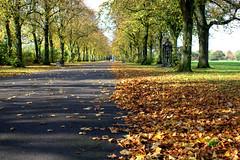 Autumn at Haslam Park, Preston