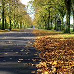 Autumn at Haslam Park, Preston