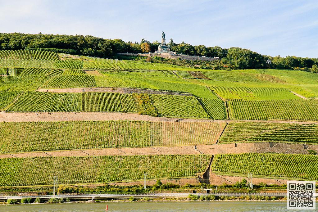 萊茵河右岸 葡萄園