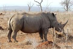 Walking with White Rhino, Mkhaya (20)
