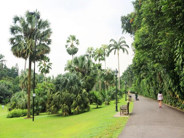 gradina botanica Gradini si Parcuri din Singapore 5