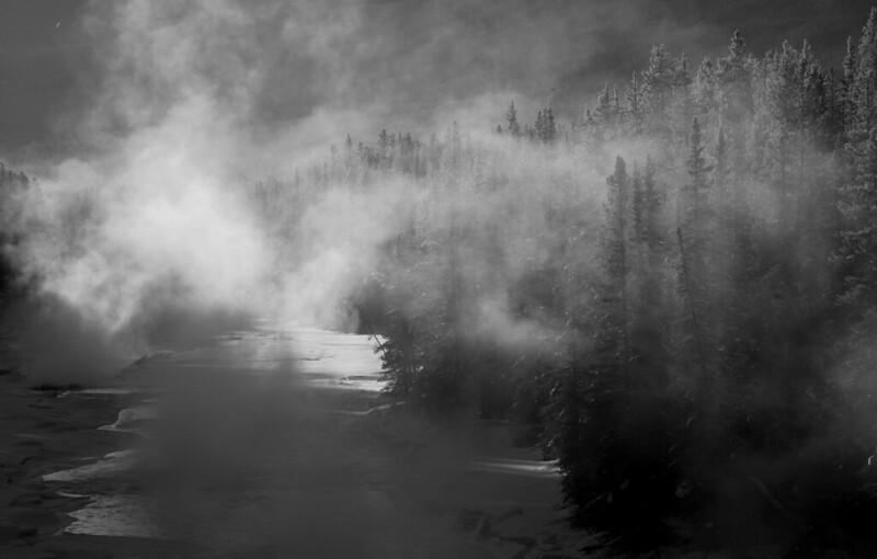 Misty Trees B&W