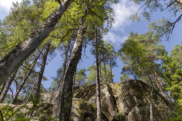 Macht des Waldes