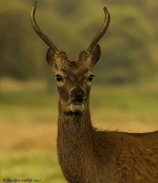 no i'm not bambi