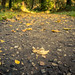 On The Autumn Way / Sur le chemin de l'automne