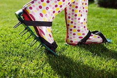 How do you care for your lawn after aeration and seeding service? This list of follow up care tips for your newly aerated and seeded lawn may help! https://buff.ly/2yE26Pd