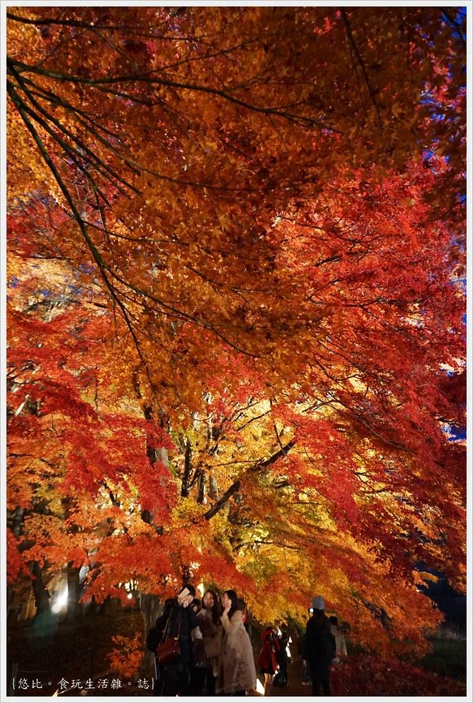 紅葉迴廊-紅葉祭-夜楓-10