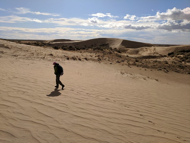 GSA field trip day 3 - marching across the dune sands and ripples.