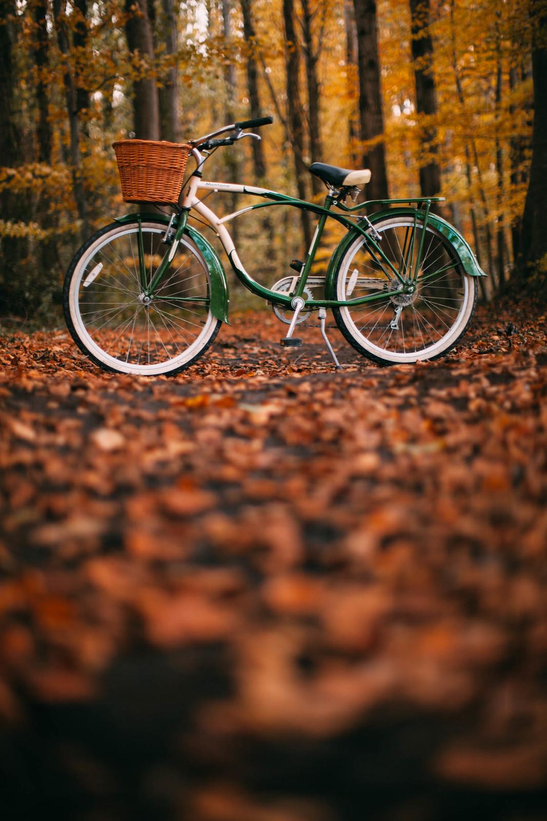 woodsbike-7