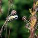 Vogelbesuch an einem verregneten Sonntag II