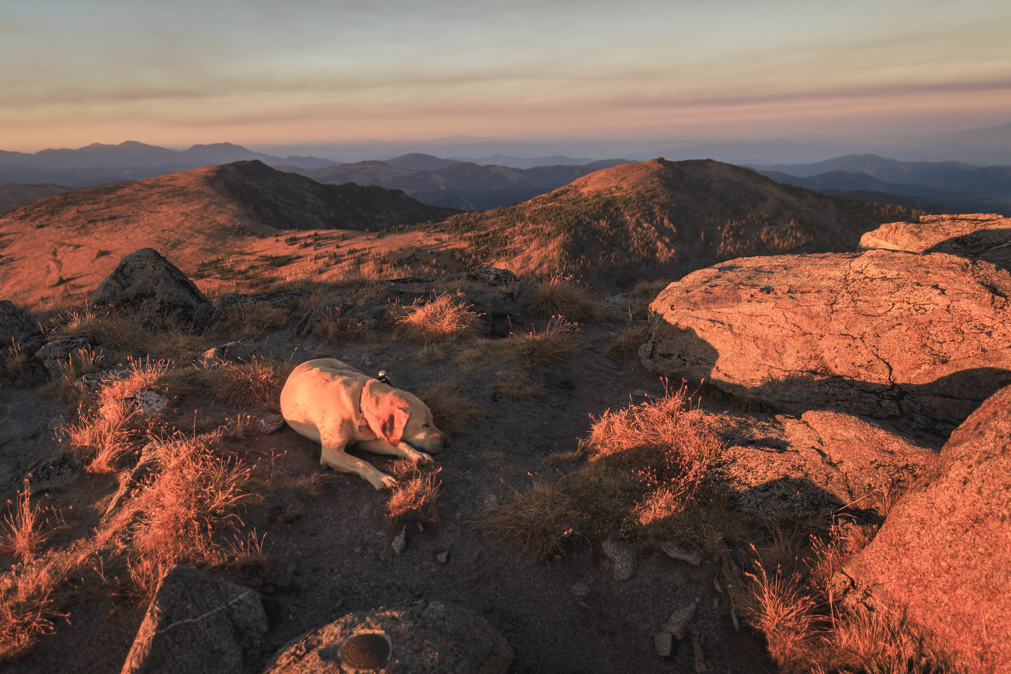 Summit dogs on Tiffany Mountain