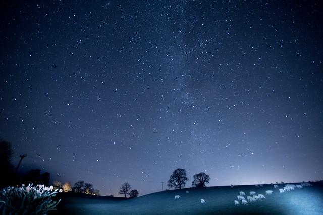 Sheep grazing under the Milky Way