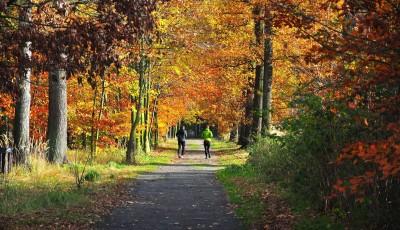 10 důvodů proč s podzimem nepřestávat běhat (a proč klidně začít)