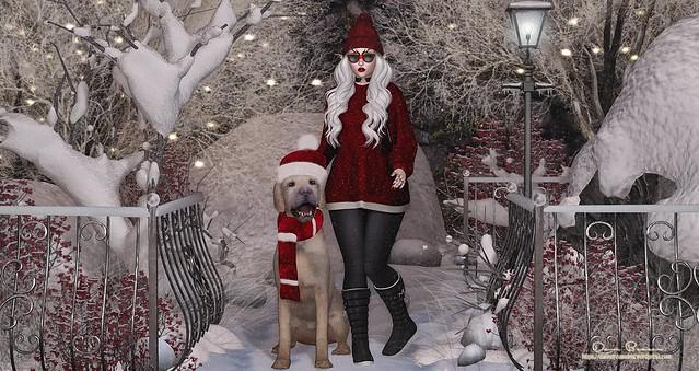 [dani] December Delights