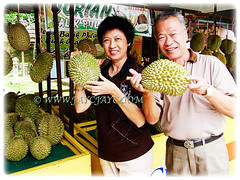 Waiting for the fruits of Durio zibethinus(Durian, Common Durian, Civet Fruit, Durian Kampong in Malay) to be opened and consumed by us at Balik Pulau, Penang, 26 July 2010
