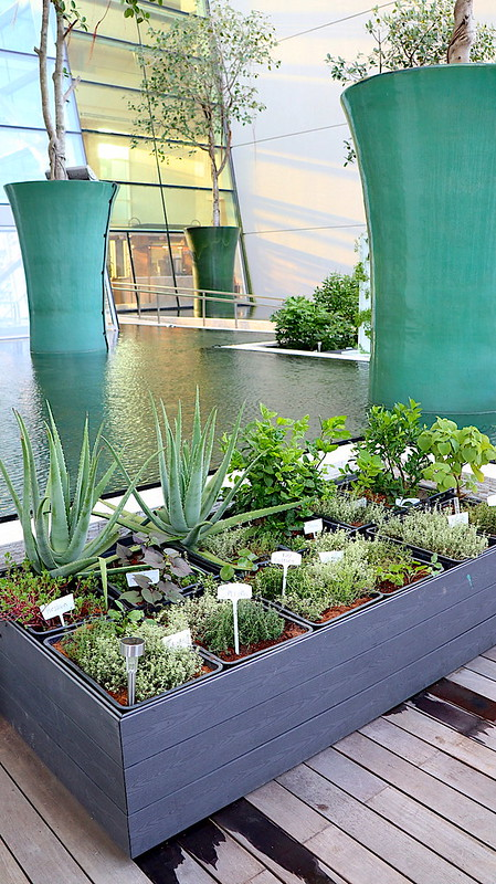 RISE has its own herb garden