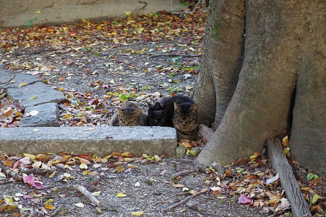 Today's Cat@2017-11-13