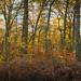 Hanbury Woods