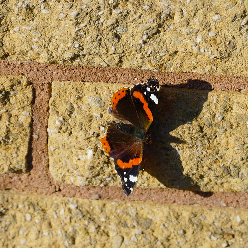 Autumn butterfly on a stone wall