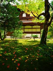 2017京阪家族自由行