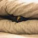 伊伊 hid in comforter~😊♥️♥️♥️ 棉被裡的貓頭伊伊~😂