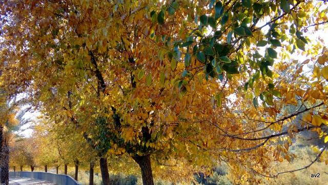 Colores de otoño.
