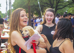 Fraternities, sororities convene at Welcome Back BBQ