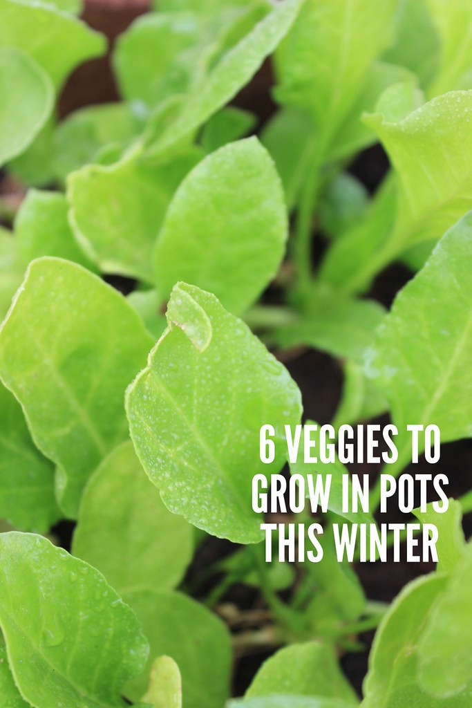 6 vegetables to grow in pots this winter