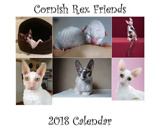 2018 Cornish Rex Friends Calendar