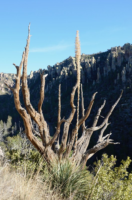 Chiricahua National Monument plants that were beautiful