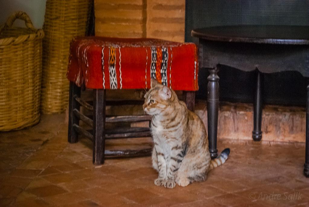 марокканский котейка