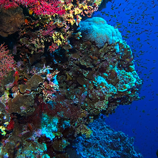 Along the wall at Little Brother, Red Sea