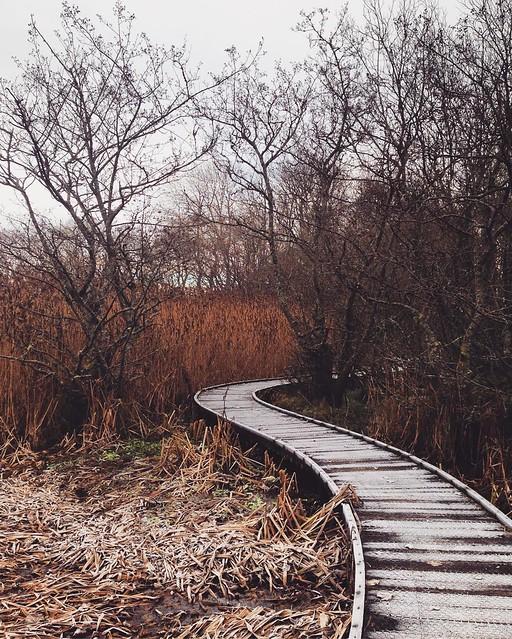 Kinnordy Loch