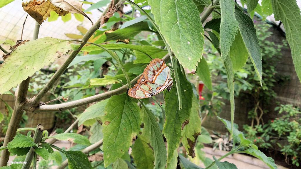 Sammakko- ja perhostarha, Santa Elena, Monteverde, Costa Rica