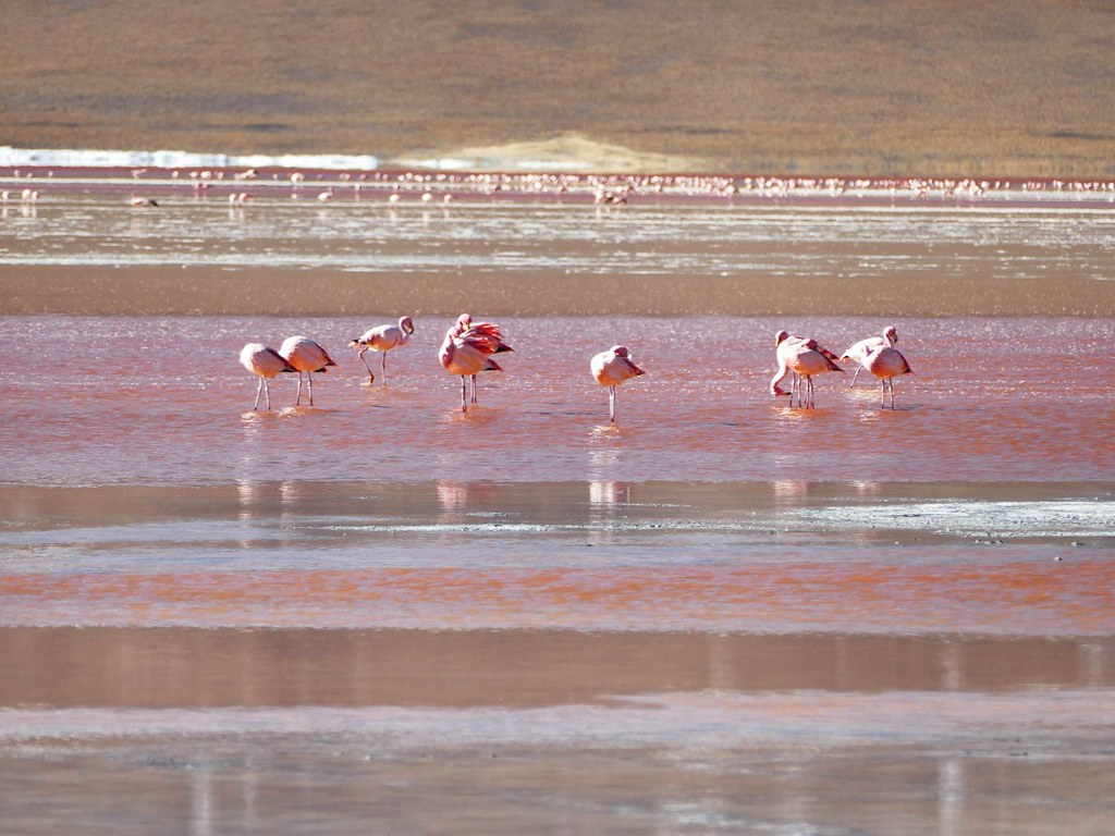 Uyuni - Laguna Colorada - Flamingo - Ethel 2