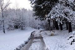 Vinter i Hisingsparken
