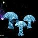 Magic Mushrooms   PB270897sm
