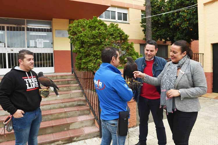 ASUSTAMIENTO DE GAVIOTAS MEDIANTE HALCONES5